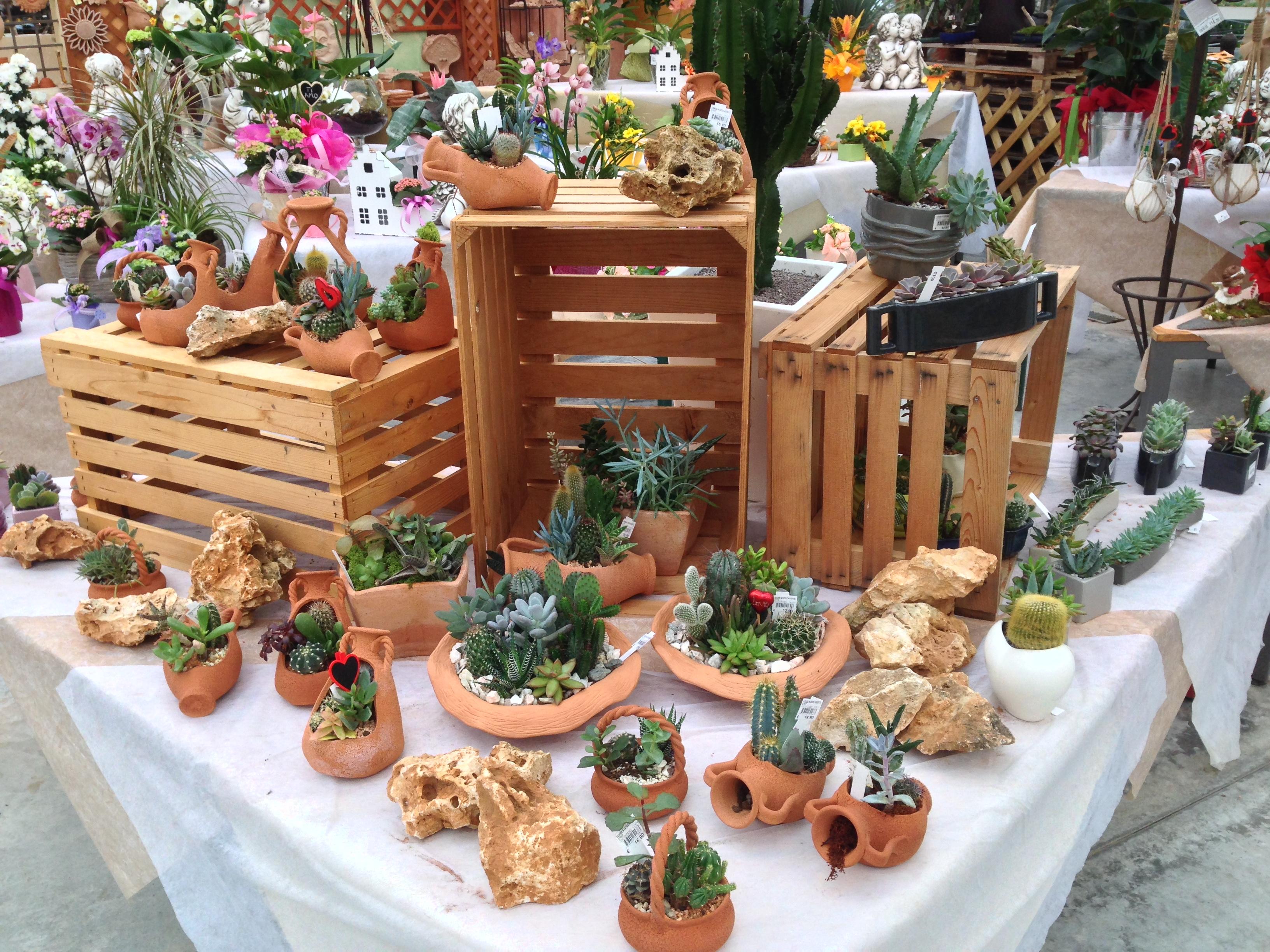 I nostri interni galleria fotografica di garden anna - Composizione piante grasse da interno ...